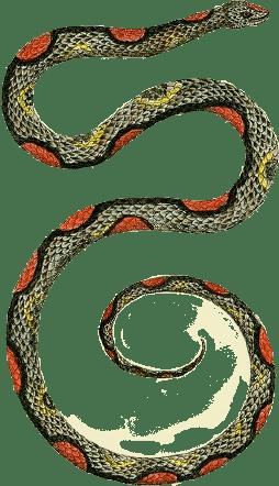 Snake Modal