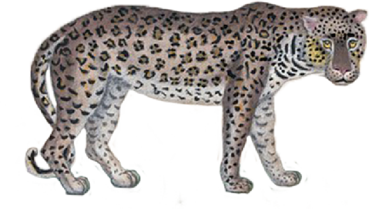 latelier-plume Tigre icône