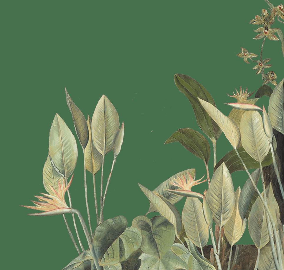 Plantes